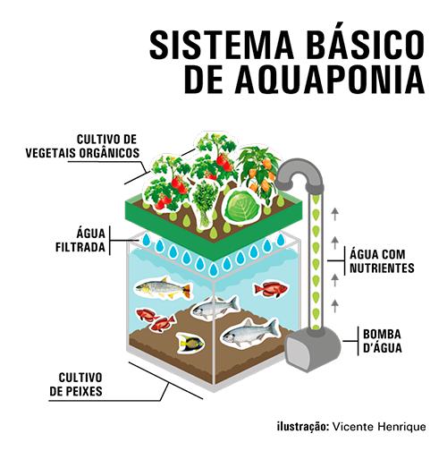 Sistema básico de aquaponia - Embrapa/Vicente Henrique