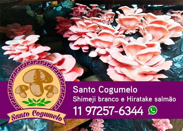 Santo Cogumelo - Produtor de Hiratake salmão