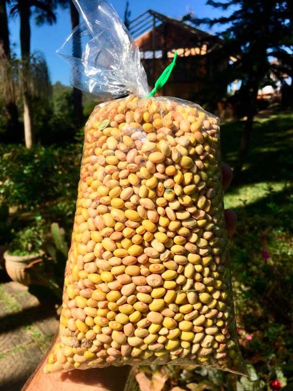 Sítio Nó de Pinho - Feijão cultivado naturalmente!