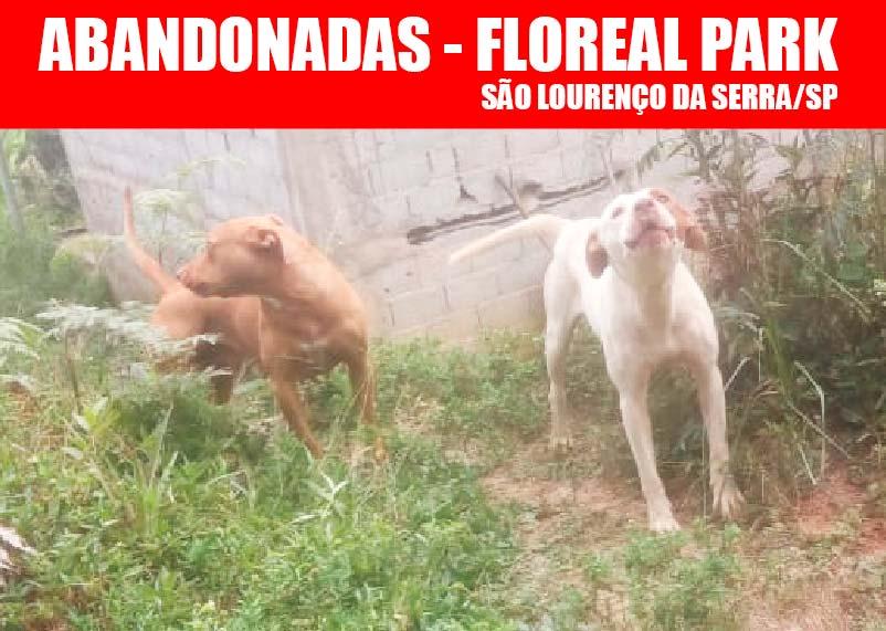 Cadelas abandonadas no Floreal Park em São Lourenço da Serra/SP
